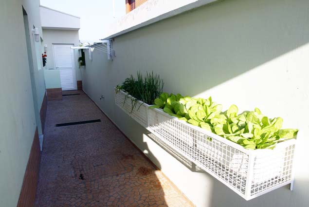 Planter with vegetables along the right hand side off an outdoor hallway