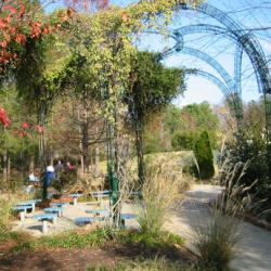 Green curved wire arches with plants growing on them over picnic tables