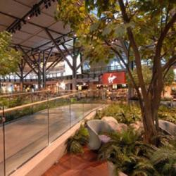 Walkway inside the airport with trees and ferns on either side.